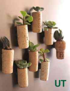 diy succulent project