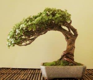 grow light succulent