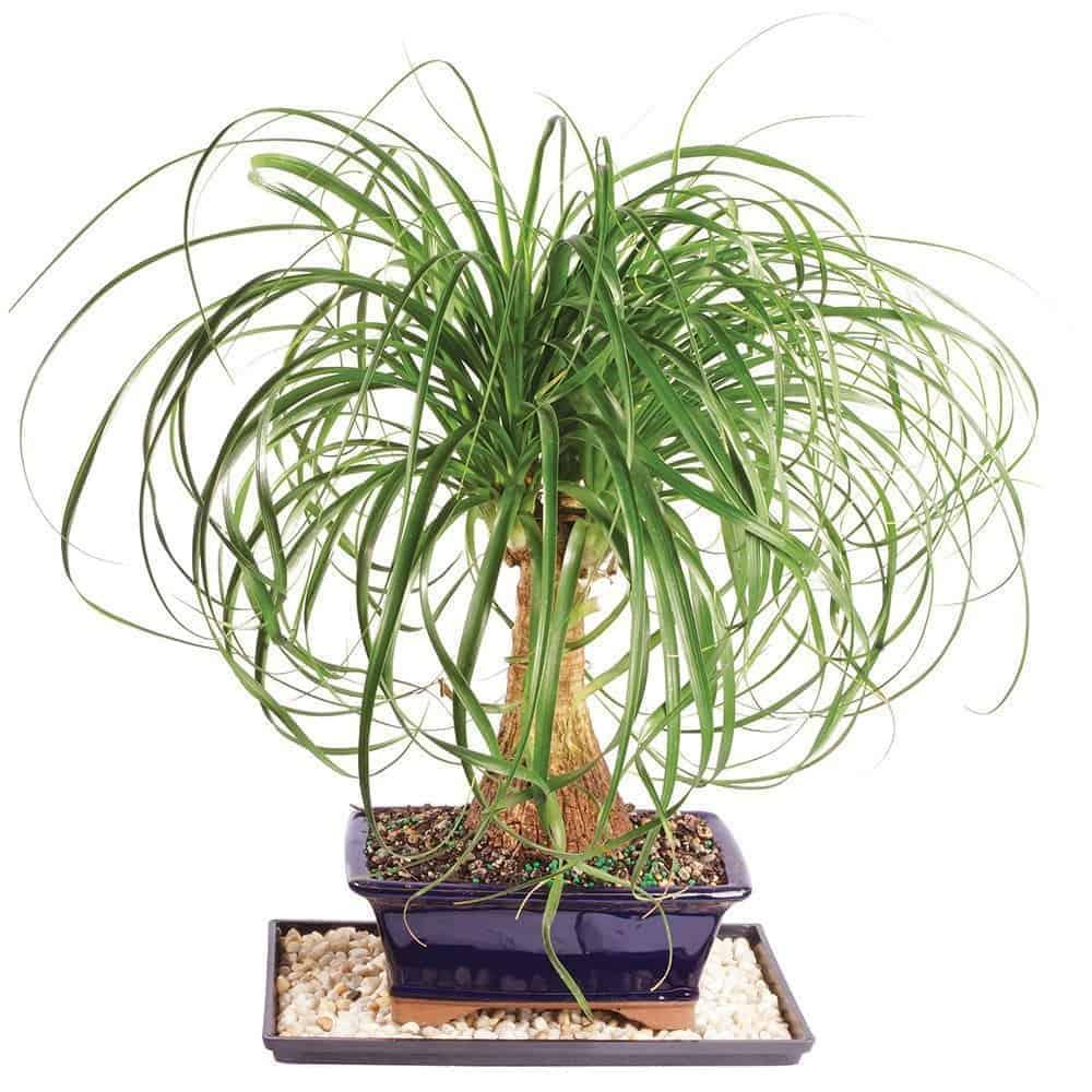 non toxic pet safe succulents