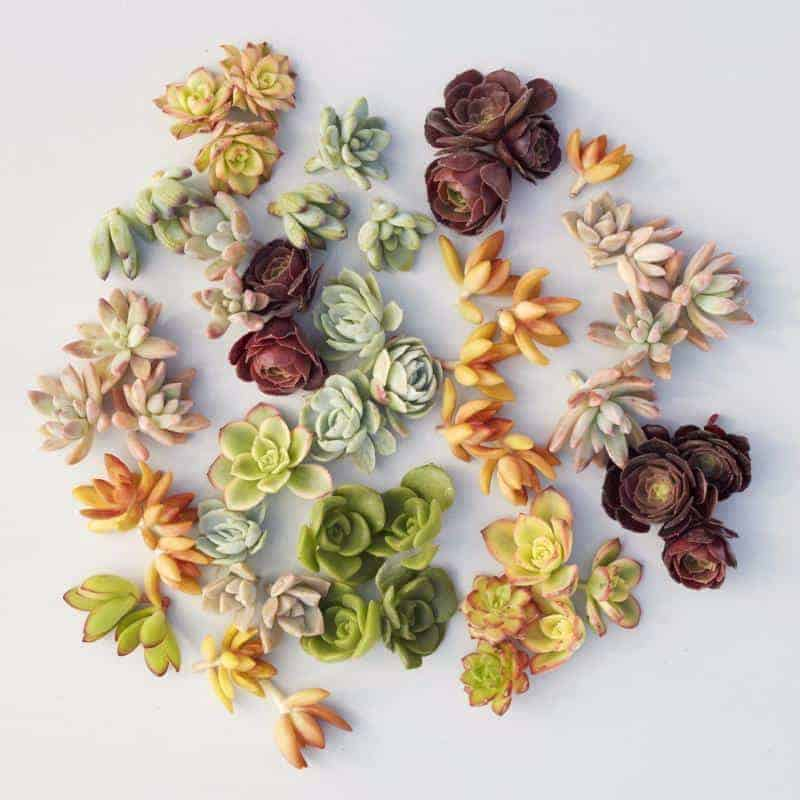 succulent gardens store review