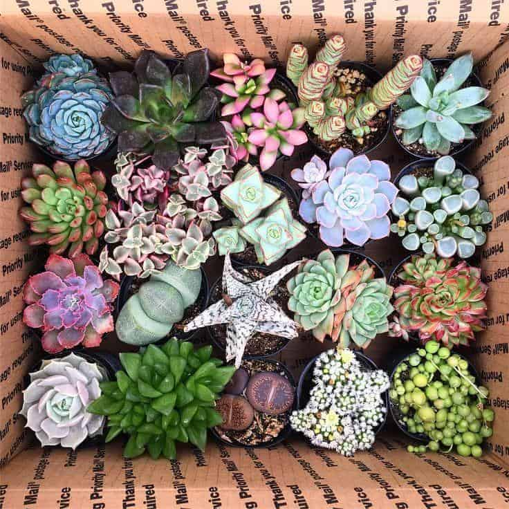 Shipping Succulents: How to Mail Plants