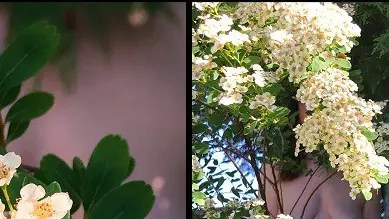 A diptych of missy in the flowers