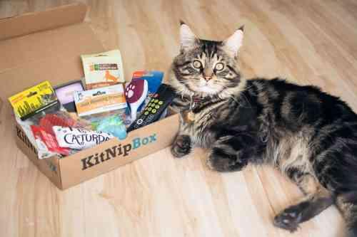 kitnipbox shipping