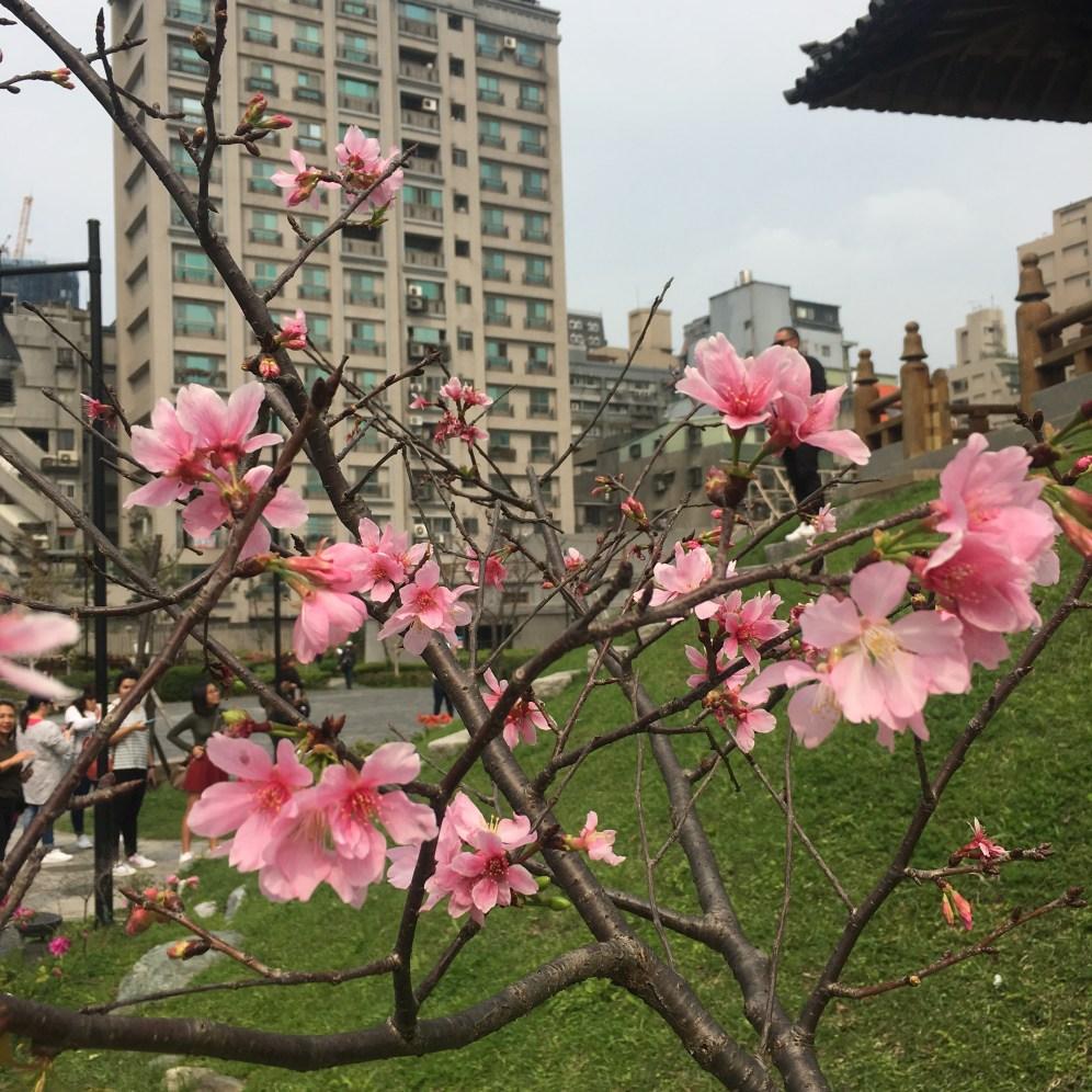 Taiwan-taiwanderful-blossoms