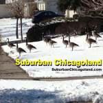 Tech :  Un propriétaire de restaurant dit merci – Suburban Chicagoland  , avis