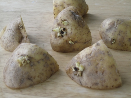 how to grow potatoes from eyes indoors