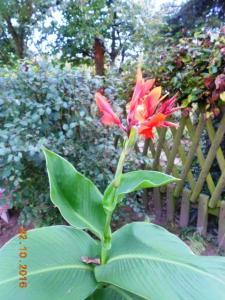 autumn-flowers-15