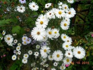 autumn-flowers-16