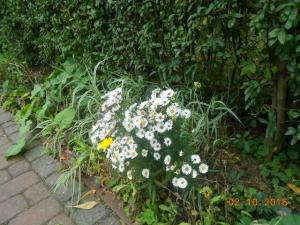 autumn-flowers-3
