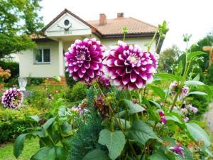 autumn-flowers-4
