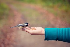 Can birds calm your kids?