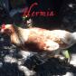 Hermia: Farmyard