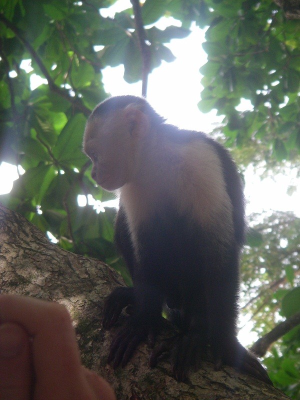 Gratuituous Monkey Photo
