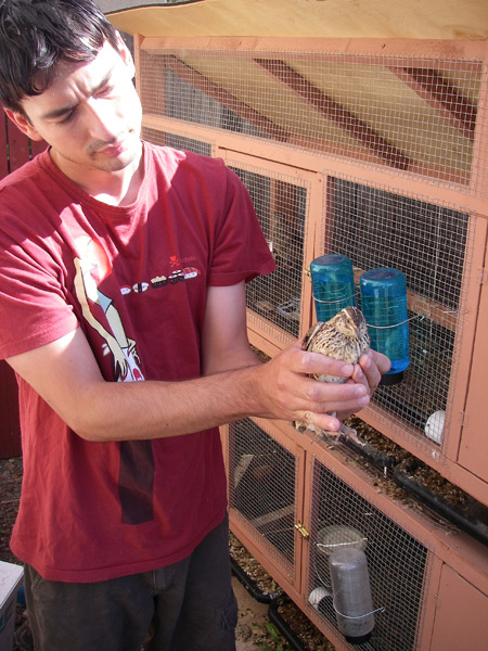 For a trapped quail, she didn't seem too happy to be rescued.