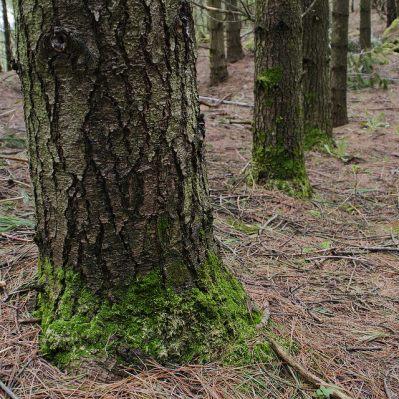Starkey Hill Trail
