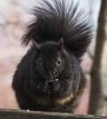 Fat squirrel at LaSalle Park