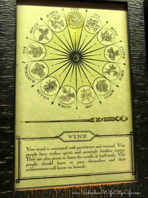 Vine Wand from Ollivanders