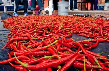 Chile temacapulinense / Foto por Alan Carmona