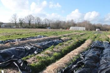 Los cultivos de verduras han sido protegidos para pasar el invierno