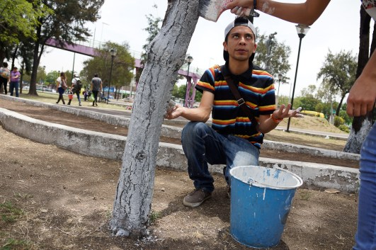 Más de 200 árboles protegidos en una tarde por vecinos