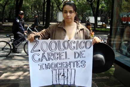 Zoológicos: la cara inocente de la esclavitud