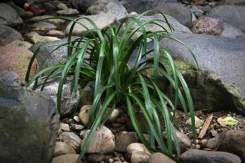 El cauce del río está sembrado de preciosas plantas.