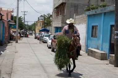 No sólo hay vehículos, también los caballos siguen circulando.