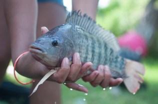 El Vado en Miraflores. Aunque se trata de especies no endémicas, sorprende encontrar –todavía– peces en esta zona del río.