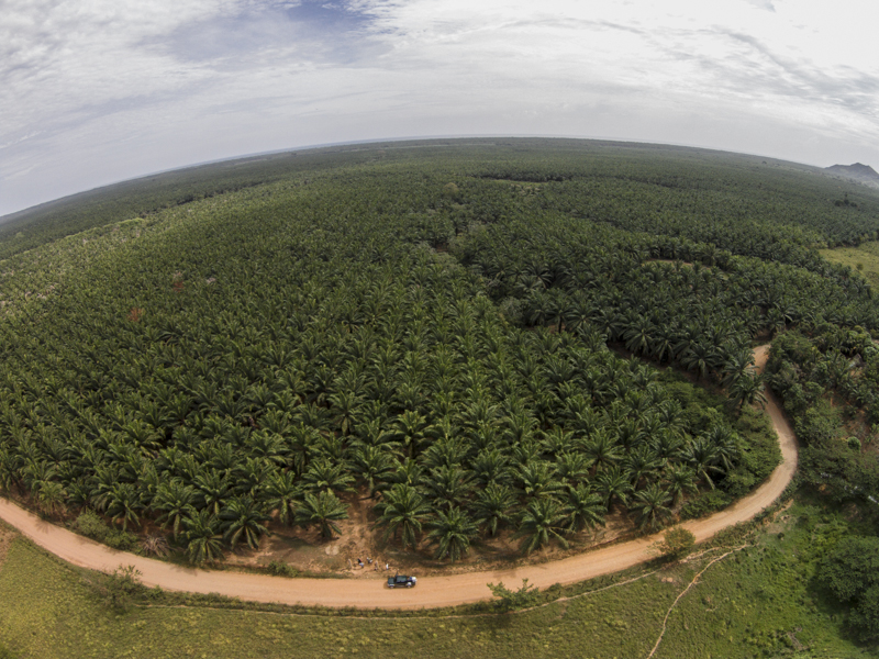 """Existe una estrategia de parte de empresas y organismos multinacionales para fomentar el saqueo de recursos y la propagación de proyectos de """"desarrollo"""" como el monocultivo de palama africana que son un atentado en contra de la biodiversidad que resguardan las comunidades originarias."""