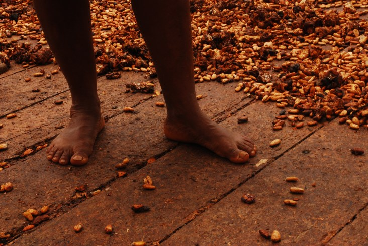 Mujer tupinambá pone al sol las semillas de cacao que serán destinadas para producir chocolate. Sierra do Pedeiro. Fotografía: Santiago Navarro F.