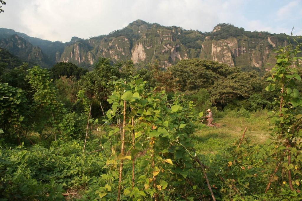 Al final, la milpa se confunde con la naturaleza y el monte