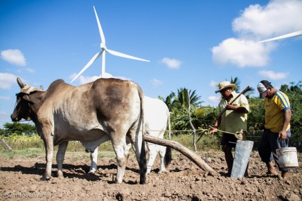 Rastros obscuros de la energía limpia en Oaxaca, México