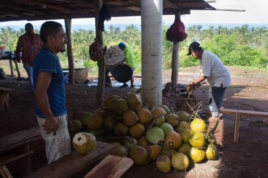 Al medio día nos refrescamos con agua de los cocos del palmar comunal.