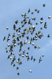 Formation_flight