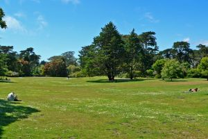800px-San_Francisco_Botanical_Garden_Great_Lawn_1