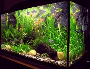 At The Fish Tank
