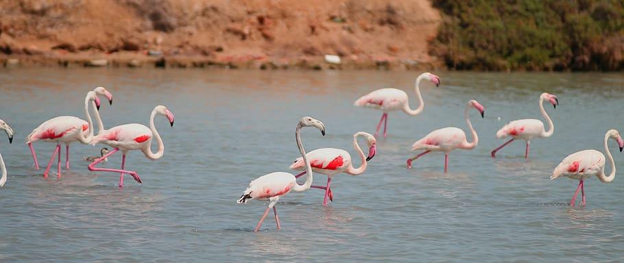 flamenco-salinas-san-pedro-pinatar-birds