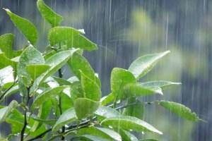 雨と葉っぱの画像