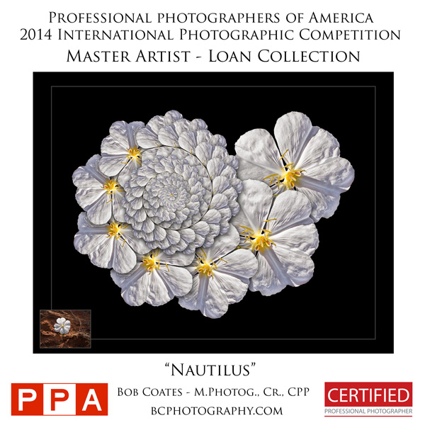 ppa_comp_prints_loan_collection_nautilus