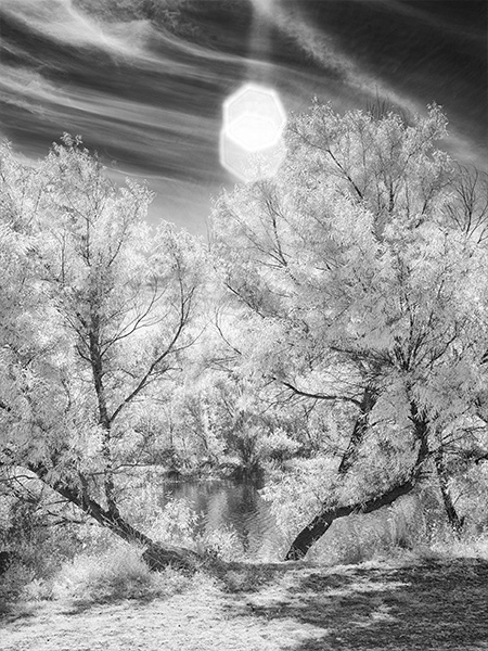 infrared photo with lens flare