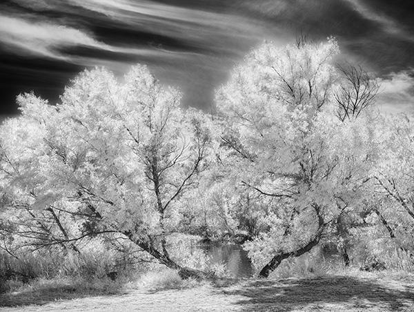 infrared image trees near lake