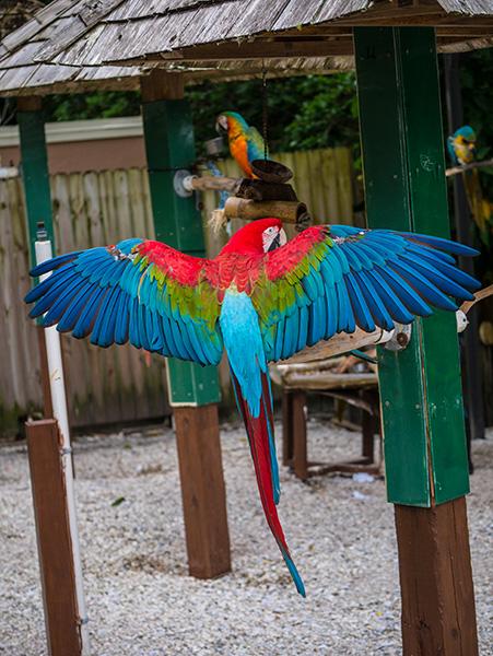 originial macaw photo