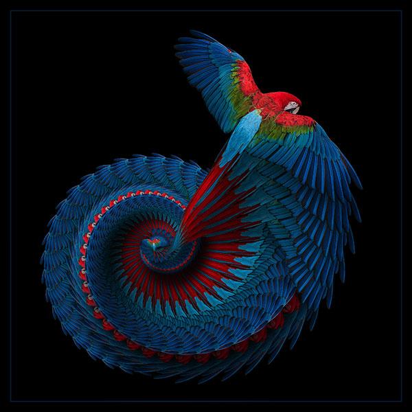 macaw fine art image