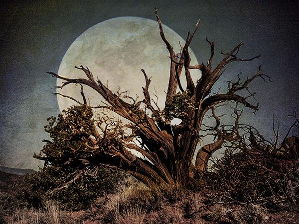 juniper and moon photo