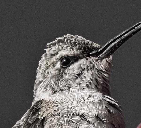 humminbird with tonality processing