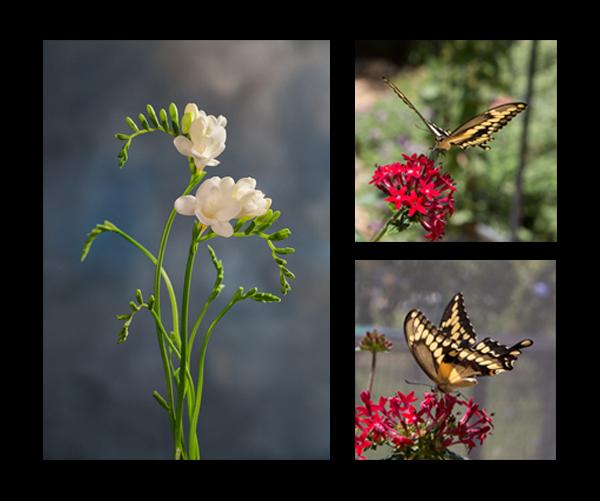 www.karennakamuraphotography.com