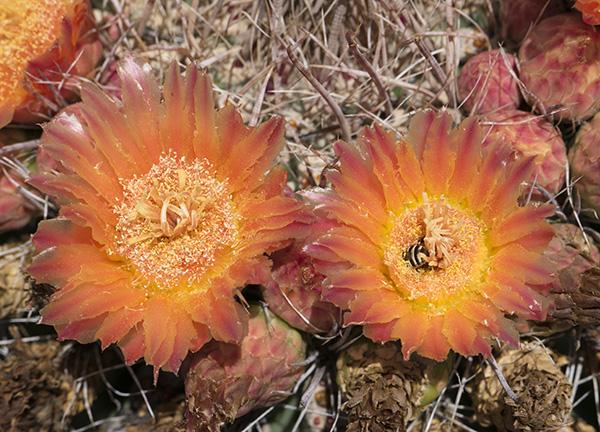 full sun cactus image