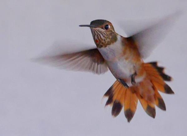 still image from hummingbird video