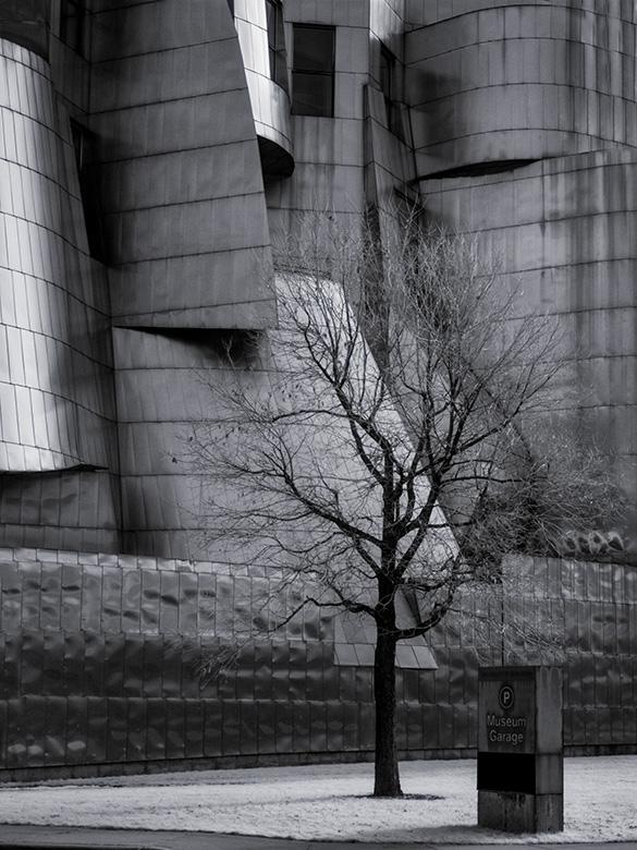 tree detail weisman museum image