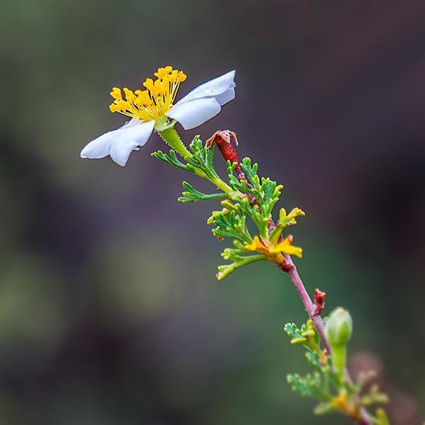 close up flower photo